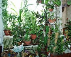 Размещение и выбор комнатных растений